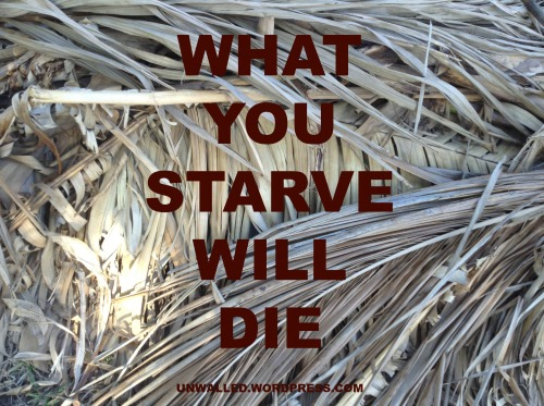 ARE YOU STARVING THE RIGHT THNGS IN YOUR LIFE?